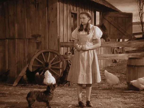 The Wizard of Oz Paused