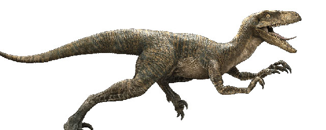 The Velociraptors are back and included among the Jurassic World dinosaurs.