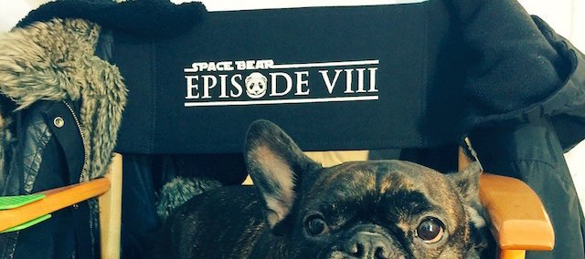 Space Bear is the working title for Star Wars: Episode VIII.
