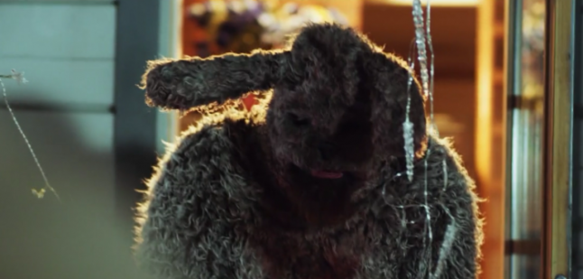 Bunny The Killer Thing Gets Offensive New Release!
