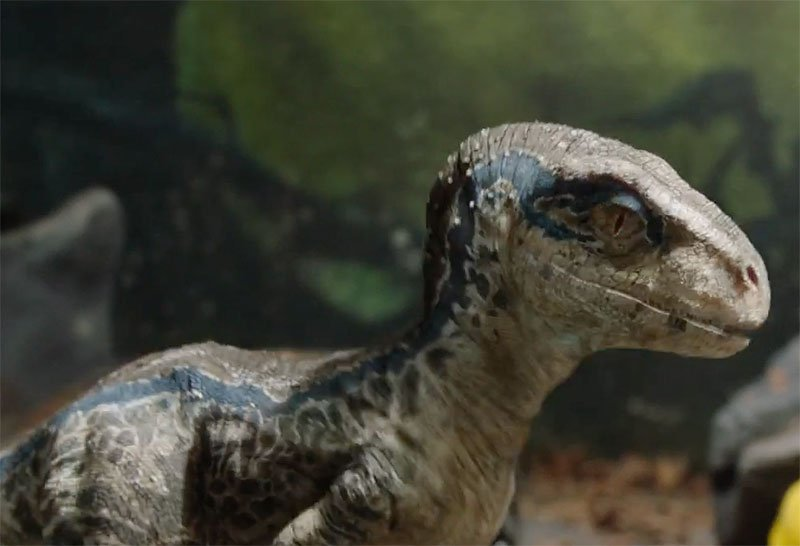 More Baby Blue in New Jurassic World Trailer Tease