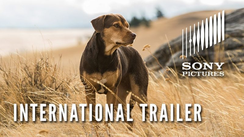international trailer for A Dog's Way Home
