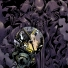 Prometheus: Fire and Stone #1 (Variant)