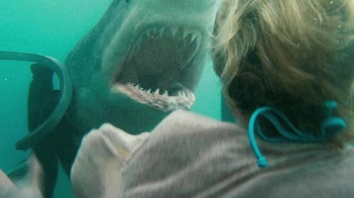 Shark_Night_3D_11